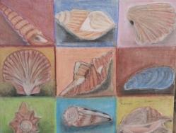 أصداف Shells