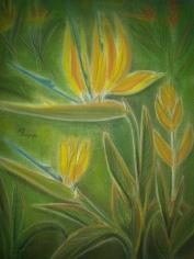 وردة طائر الجنة Baradise Flower