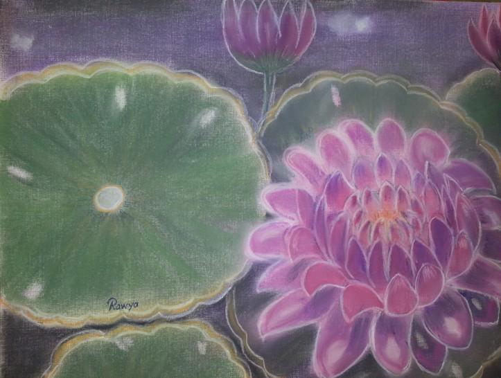 زنبقة - Water lily