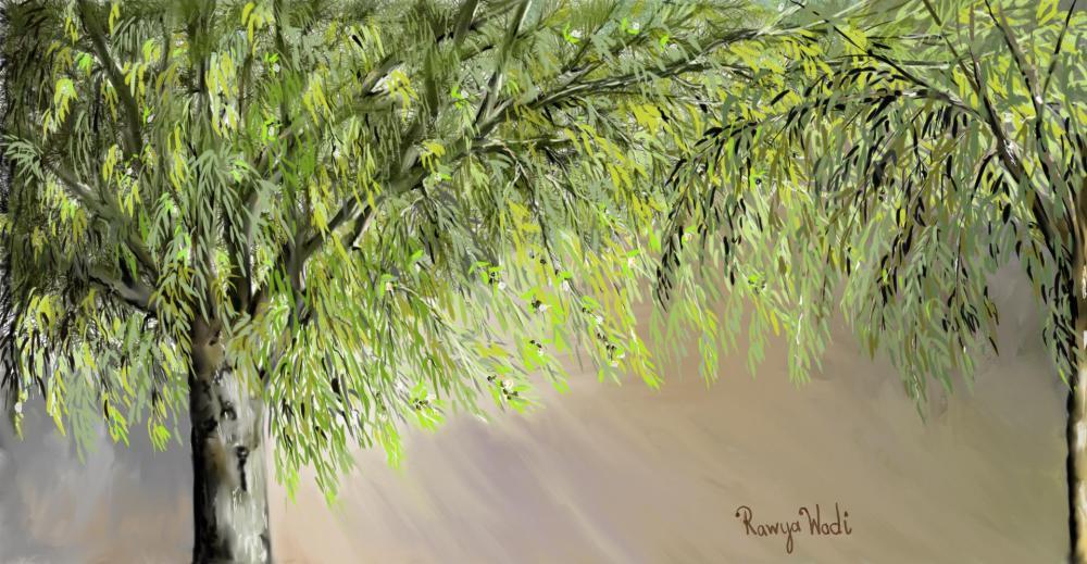 شجرة الكينيا1